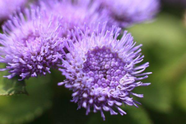 Cuales Son Las Flores De Otono World Health Design