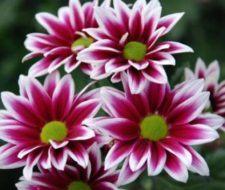¿Cuáles son las flores de Otoño?