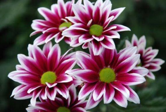 Cu les son las flores de oto o for Arboles plantas y flores