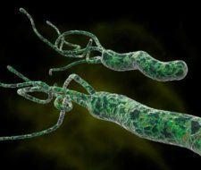 Bacteria Helicobacter Pylori: Síntomas y Tratamiento