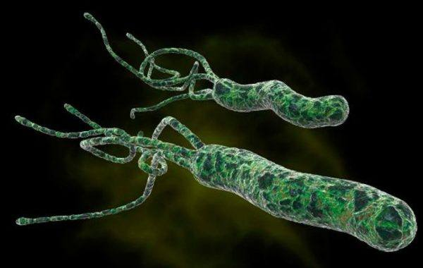 bacteria-helicobacter-pylori-sintomas-tratamiento