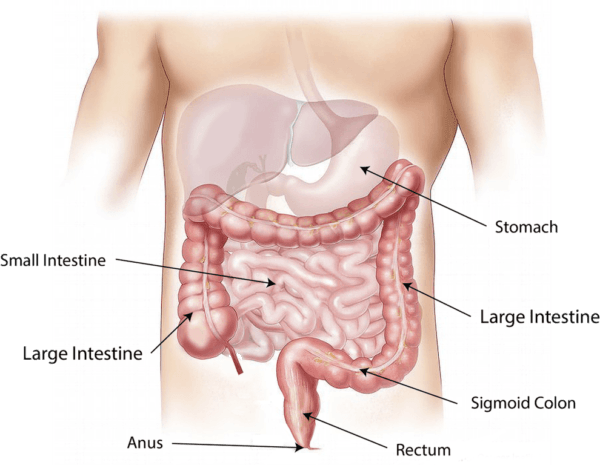 causas-creatina-alta-en-sistema-digestivo