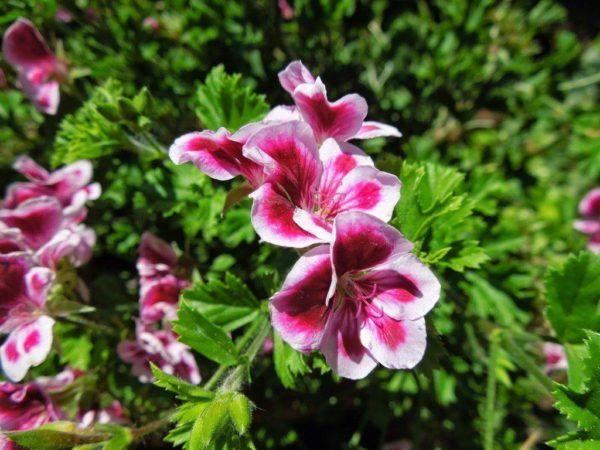 Cu les son las flores de invierno for Plantas de invierno exterior