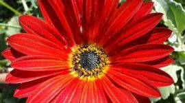 ¿Cuáles son las flores de Invierno?