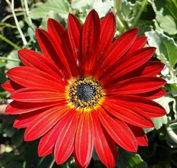 Cuales Son Las Flores De Invierno World Health Design