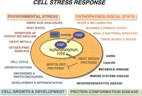 la-preocupacion-afecta-nuestro-sistema-digestivo-celulas