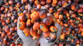 Productos y alimentos que NO llevan Aceite de Palma: Alternativas