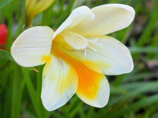 Cu les son las flores de la primavera - Cuales son las plantas con flores ...