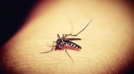 ¿Cuales son las epidemias del Siglo XXI?