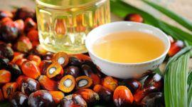 Aceite de Palma: beneficios, propiedades y problemas