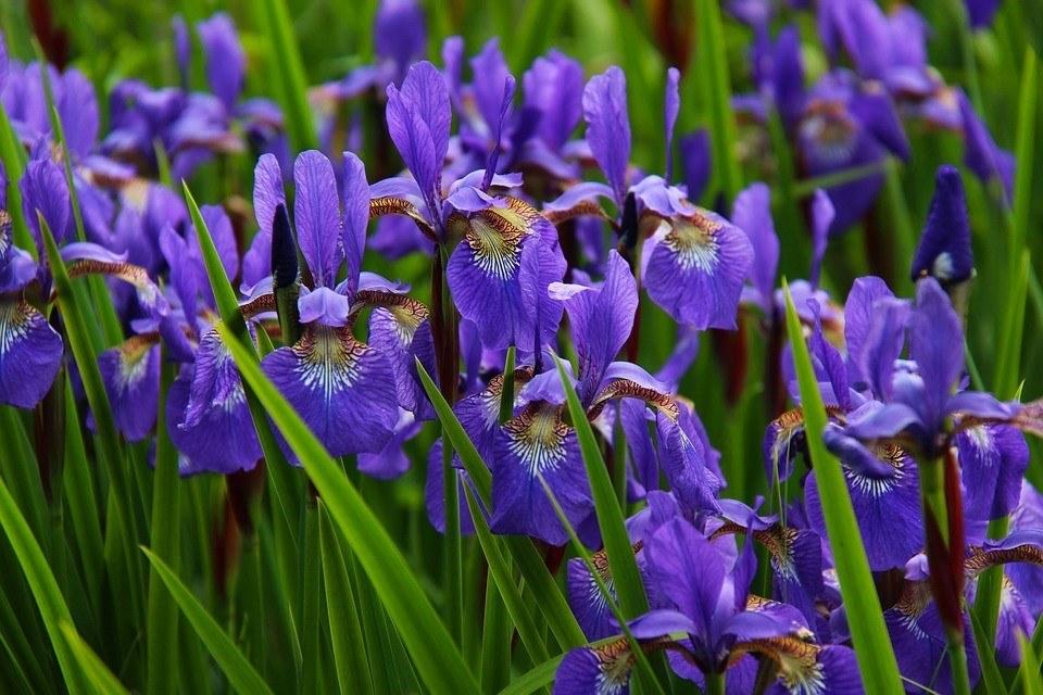 Cuales Son Las Flores De La Primavera World Health Design
