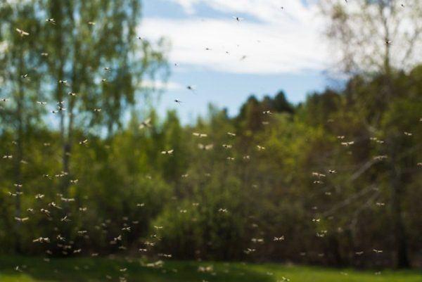 Alergia mosquitos bosque