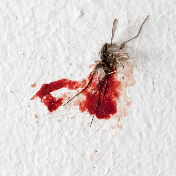 Alergia mosquitos sangre