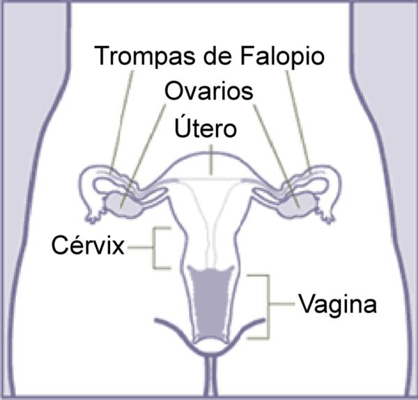 Que es el virus del papiloma humano genital
