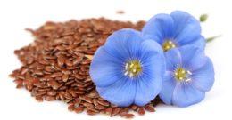 Semillas de lino – Qué son, beneficios, propiedades, usos y contraindicaciones