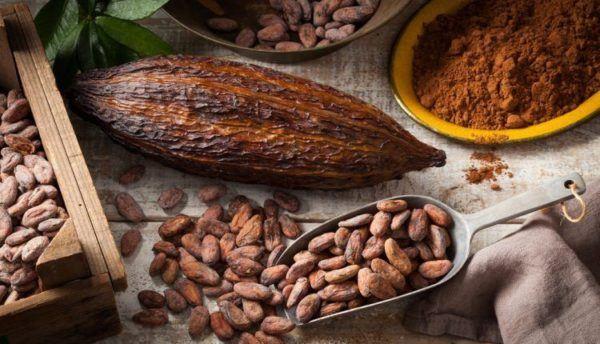 El grano de cacao