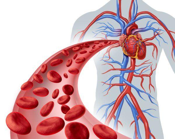 Activa la circulacion sanguinea
