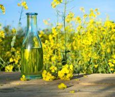 Propiedades y beneficios del aceite de nabina