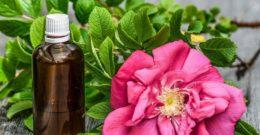 ¿Qué son los aceites esenciales? Los mejores usos y donde comprar aceites esenciales naturales