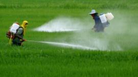 Encuentran herbicidas en los cereales de avena para niños