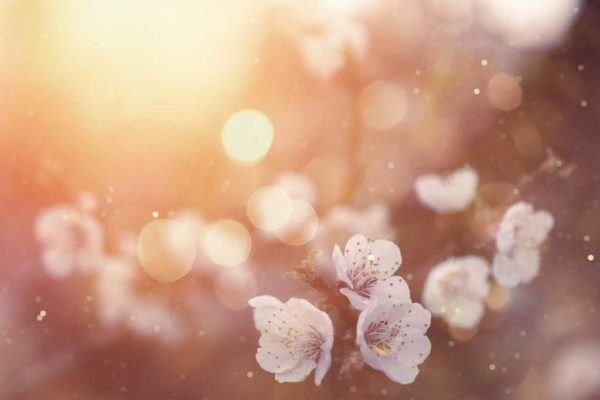 Remedios para la alergia de primavera polen