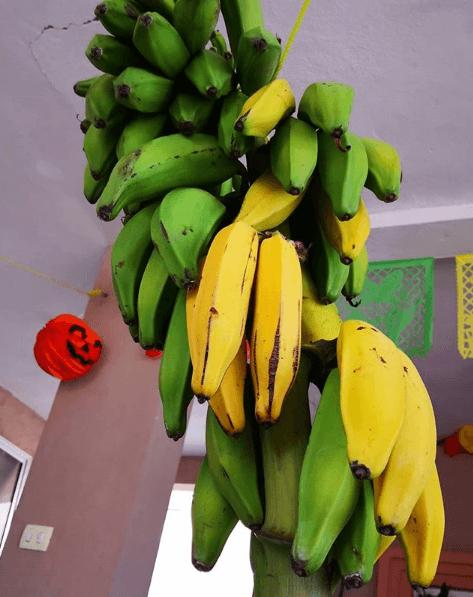 Trucos y remedios caseros para cortar la diarrea plátanos
